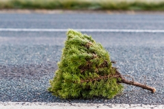Tree tip on the road