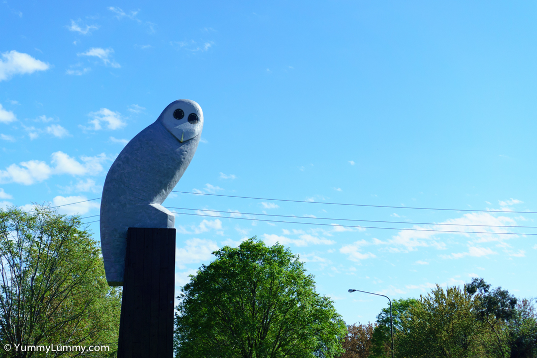 Hello Mr Owl SONY ILCE-7S with E 35mm F1.8 OSS at 35mm and f/2.8, 1/2000sec, ISO 100