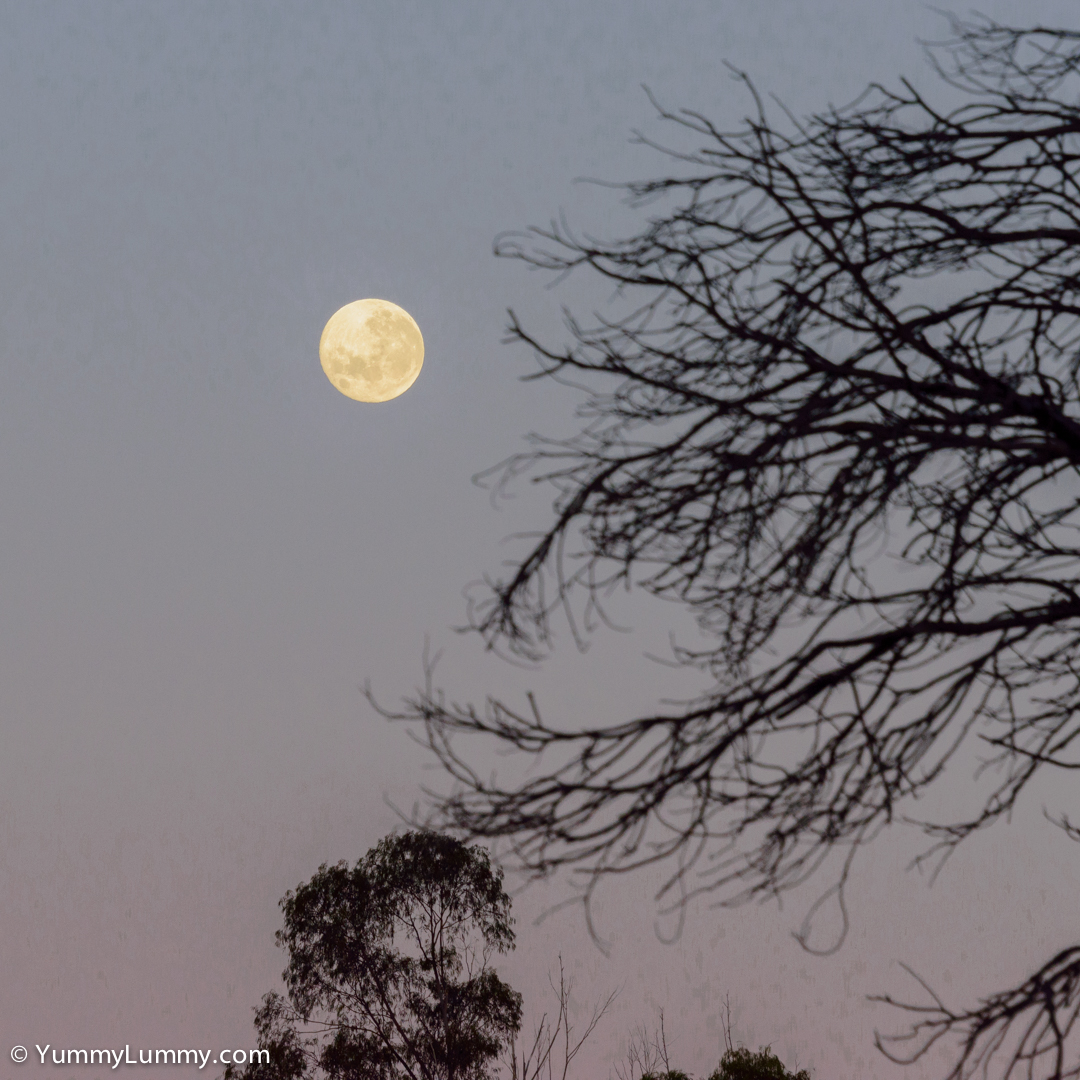 Saturday morning moon  NIKON D810 with 28.0-300.0 mm f/3.5-5.6 at 190mm and f/8, 1/250sec, ISO 400