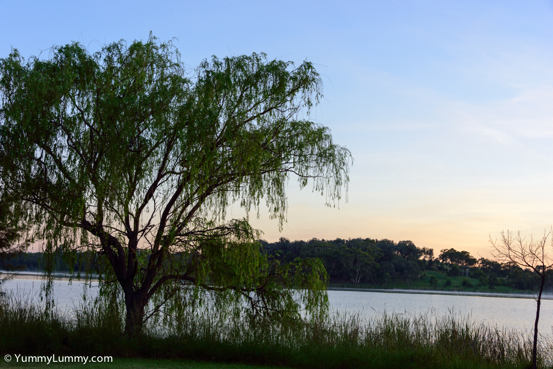 Weepy tree on Lake Ginninderra  NIKON D810 with 28.0-300.0 mm f/3.5-5.6 at 50mm and f/8, 1/80sec, ISO 400