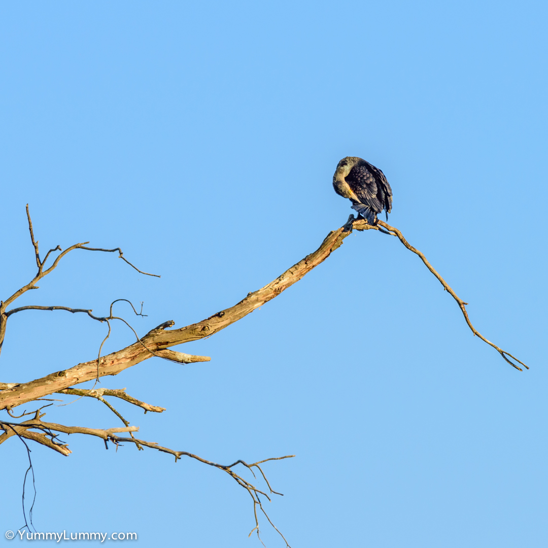 A bird in a tree  NIKON D810 with 28.0-300.0 mm f/3.5-5.6 at 300mm and f/11, 1/320sec, ISO 400